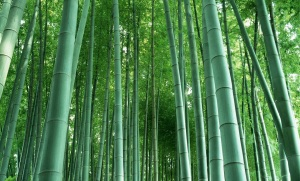 Bamboo, staple of panda edibles and amazing wire work ninja fighting in the movies... and yarn.